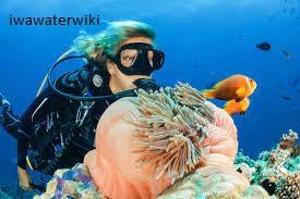 Diving dan Snoerkeling di Pulau Tatawa Besar