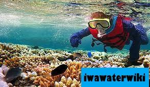 7 Tempat Teratas Untuk Diving dan Snorkling di Australia