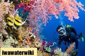 Hal Penting Perbandingan Snorkling serta Diving