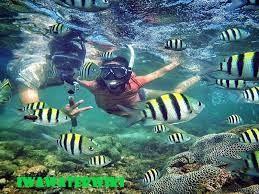Melihat Spesies Langka Dengan Komunitas Snorkeling di Pantai Sadranan, Jogja