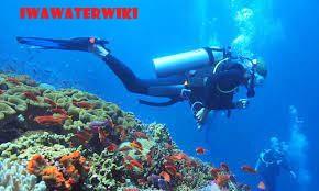 Snorkeling dan Scuba Diving di Pulau Gili Meno