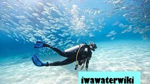 Deep Diving: Aturan, Rekomendasi, dan Fakta Menarik