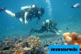 Scuba Diving di Hawaii : Jelajahi Dunia Bawah Laut Hawaii