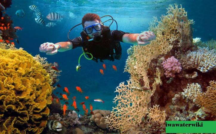 Tempat Menyelam Scuba Terbaik di Brasil