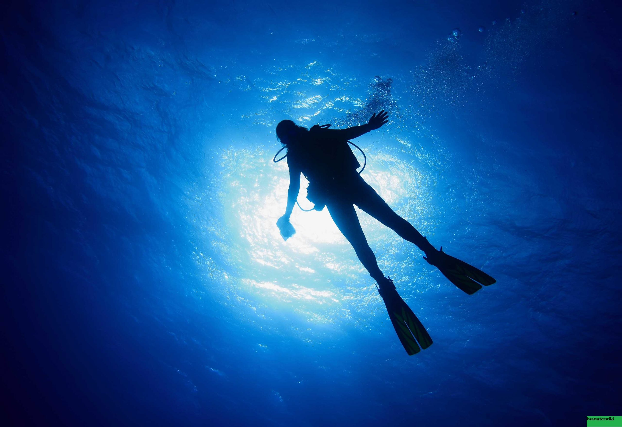 Tempat Menyelam Terbaik di Aruba yang Tidak Boleh Anda Lewatkan