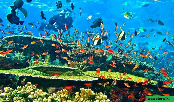 5 Tempat Snorkeling Terbaik di Singapura