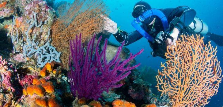 Tempat Menyelam Terbaik Di Korea Selatan